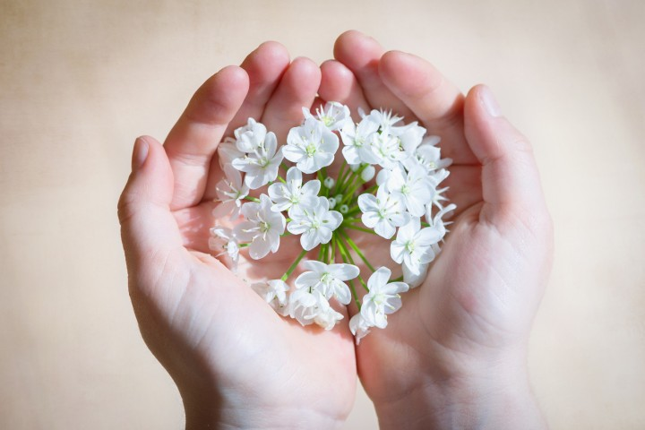 White flower on human hands